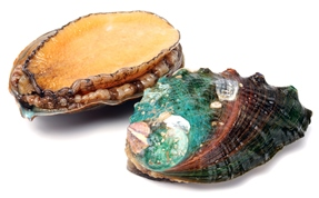 Rough abalone shell