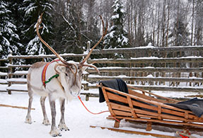 Reindeer with a sled