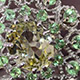 Madagascar Green Sillimanite Jewelry