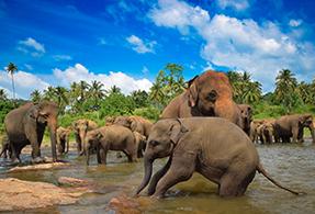 Sri LankaAfricaMyanmarAsia and the Middle East