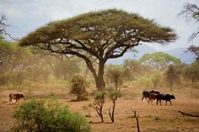 Morogoro Tanzania